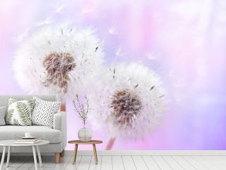 Pastel background of two beautiful dandelion flowers with flying feathers. Spring or summer nature scene.