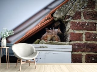Squirrels on the roof