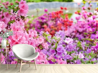 Pink and violet rhododendrons bloom in garden