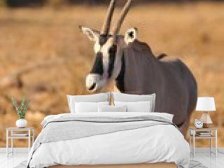 Oryx in Knya