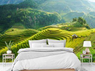 Terraced rice field in harvest season in Mu Cang Chai, Vietnam. Mam Xoi popular travel destination.