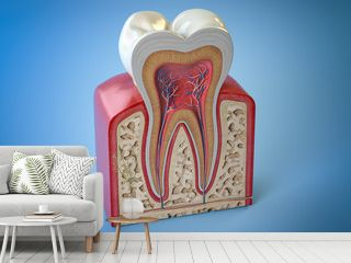 Dental tooth structure. Cross section of human tooth on blue background.