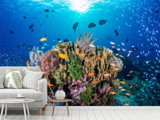 Tropical fish on a colorful, healthy tropical coral reef
