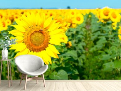 Sunflower natural background. Beautiful landscape with yellow sunflowers against the blue sky. Sunflower field, agriculture, harvest concept. Sunflower seeds, vegetable oil