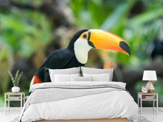 Colorful Toucan Bird Profile photo