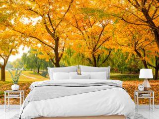 Beautiful yellow ginkgo tree in autumn garden