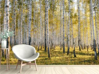 Birch tree grove in evening sunlight. Trunks with white bark. Nature forest landscape in early autumn. Ural, Russia