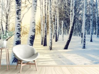 Winter birch grove at sunset, toned.  Winter forest. Cold winter landscape