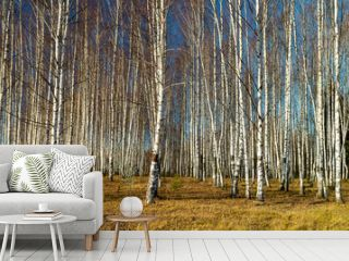 Natural background with birch by grove by autumn