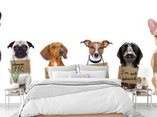homeless row of dogs to adopt