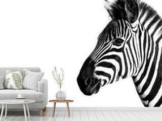 Burchells Zebra in the Kruger National Park South Africa