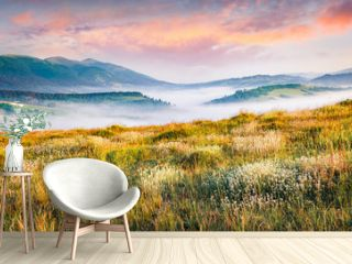 Blooming white flowers in Carpathians. Foggy summer scene of mountain valley. Colorful morning view of Borzhava ridge, Transcarpathians, Ukraine, Europe. Beauty of nature concept background.