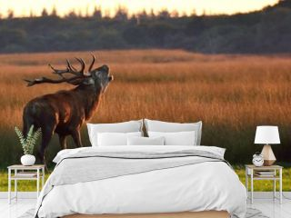 Red Deer Standing On Grassy Field