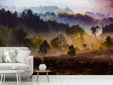 misty countryside forest