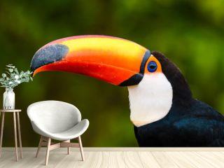 toco toucan portrait