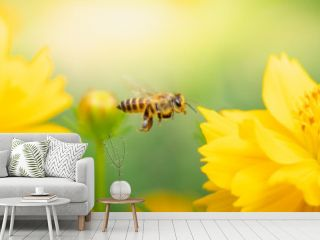 Nature of flower and bee in garden using as cover page background natural flora wallpaper or template brochure landing page design
