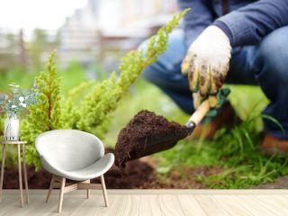 Gardener planting juniper plants in the yard. Seasonal works in the garden. Landscape design. Landscaping.