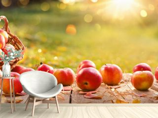 Apples in a Basket Outdoor. Sunny Background