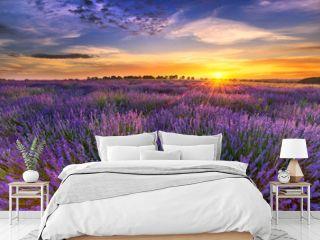 Beautiful lavender field sunset landscape