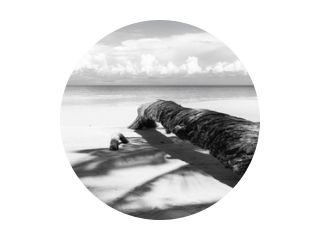 Fallen palm tree in black and white