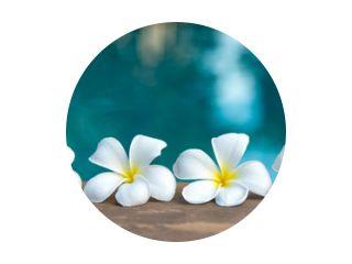 Tropical frangipani white flower near the swimming pool, flower spa. Copy space.