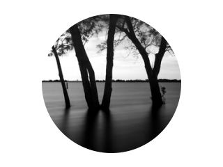 silhouette of a tree, Long Exposure, Black and white, B&W