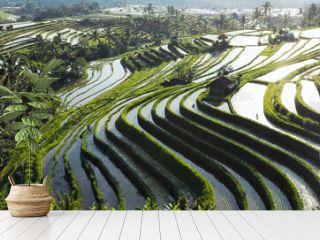 Bali rice gardens reflecting sun and sky, incredible beauty