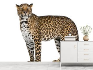 Portrait of leopard standing against white background
