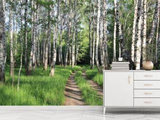 road in a birch grove