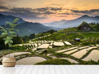 Rice Paddies in Kumano, Japan