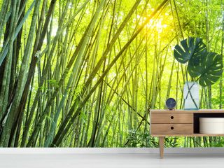 bamboo forest in tropical