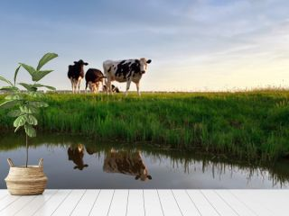 cows on pasture reflected in river