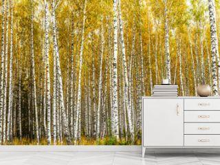 Early autumn birch grove