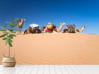 Camels in the Sand dunes desert of Sahara, South Tunisia