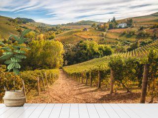 Langhe vitigni Barolo Barbaresco colline paesaggio autunno, colori autunnali. Vigneti e vigne in Piemonte paesaggio Langhe e Roero. Italia
