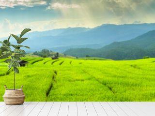 Views of rice terraces at Ban Pa Bong Piang. Chiang Mai, Thailand