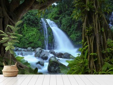 Deep tropical jungles of Nepal