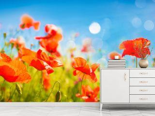 Poppies field at sunlight