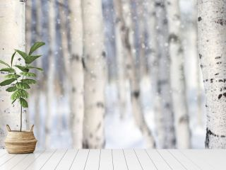 Natural background with white trunks of  birch tree
