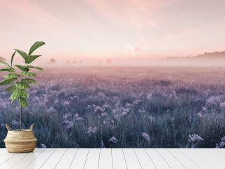sunrise field of blooming pink meadow flowers