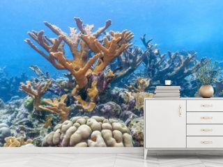 Caribbean coral reef
