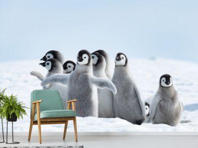 Emperor Penguins chiks