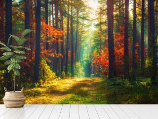 Autumn nature landscape of colorful forest in morning sunlight.