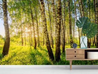 Summer birch forest.