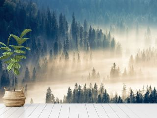 thick glowing fog among spruce forest down in the valley. wonderful nature background. aerial viewpoint. typical scenery of romanian carpathian mountains in autumn