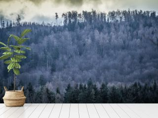 szadź na drzewach w lesie górskim