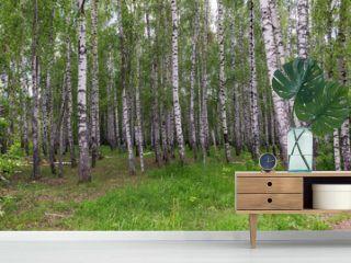 landscape in a birch grove