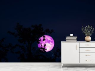 pink Full Hunger Moon on night sky back silhouette tree and cloud