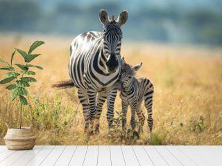 Plains zebra and foal stand facing camera