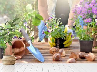 panoramic view on a gardening table with gardener holding a viola  flower pot background